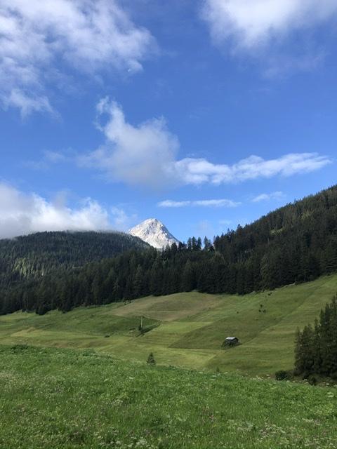 Saftige Wiesen vor einem Alpenpanorama